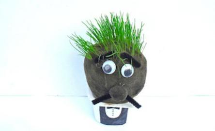 Grow a grass head