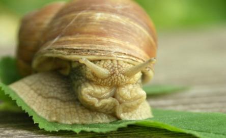 Build a snail farm
