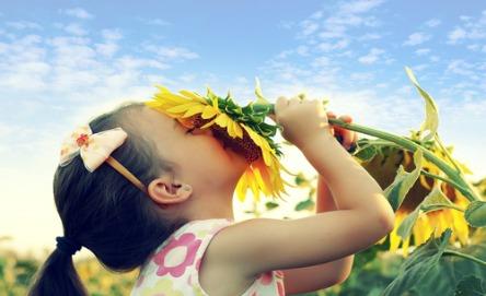 Grow sunflowers