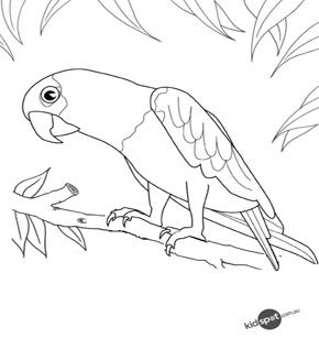 Talking Parrot Colouring Page