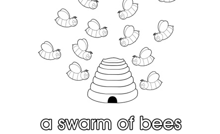 A swarm of bees