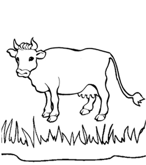 Cow Colouring Page