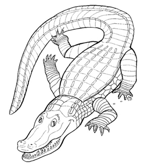 Crocodile Colouring Page