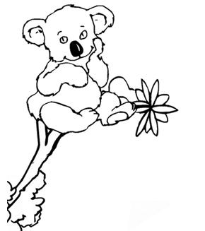 Koala Colouring Page