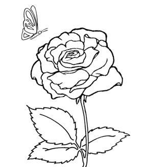 Blooming Rose Colouring Page