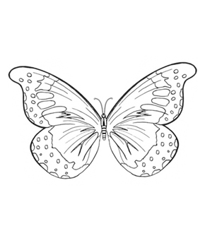 Butterfly Wings Colouring Page