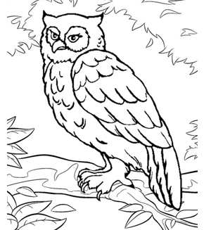 The Brooding Owl Colouring Page