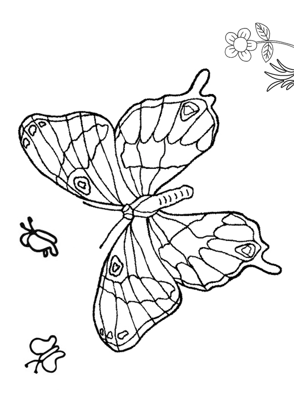 Beautiful Butterfly Colouring Page