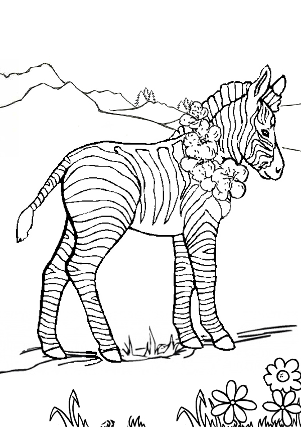 animals colouring pages kids colouring colouring pages