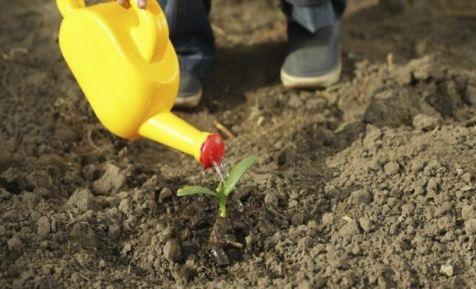 Kids gardening activities