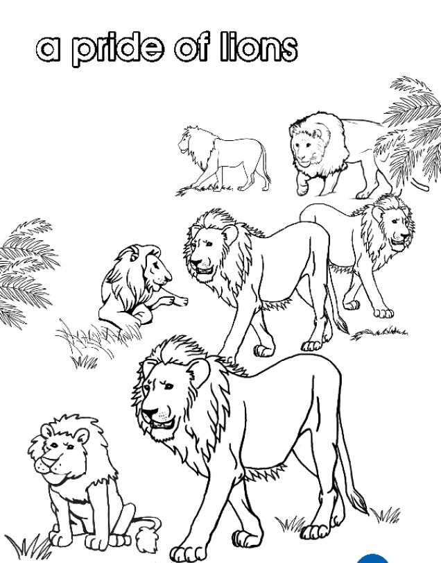 Print Your Own Pride Of Lions Colouring Page